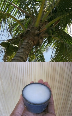 coconut tree and oil.jpg